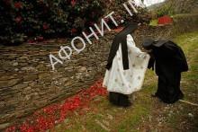 Монашество Афон