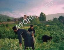 Труд афонских монахов
