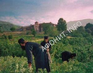 Монахи Афона на огороде